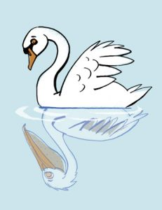 Swan staring into water, seeing his reflection as a pelican - humorous line drawing illustration by Michel Streich